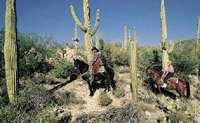 Tucson Arizona desert sceen, cowboys on horses