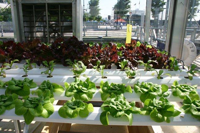 Jardinería en Vivienda Asistida - Instalaciones de Vivienda Asistida