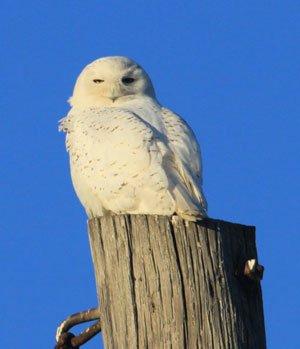 owl-blog.jpg