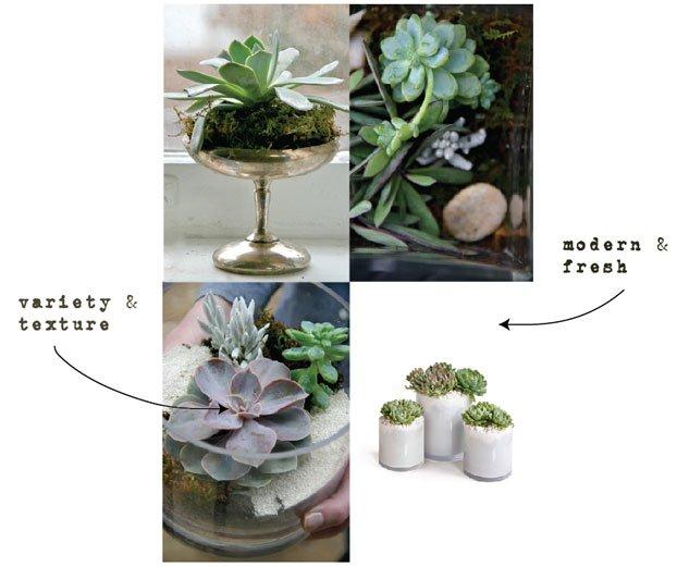 succulents-5.jpg