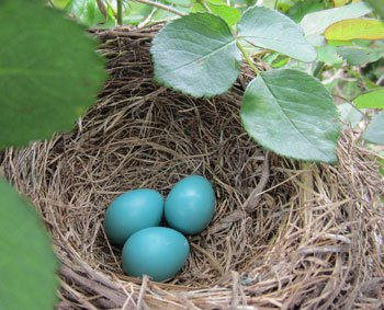 1-robin-eggs.jpg