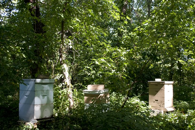 threehives_BackdoorHarvest_275.jpg