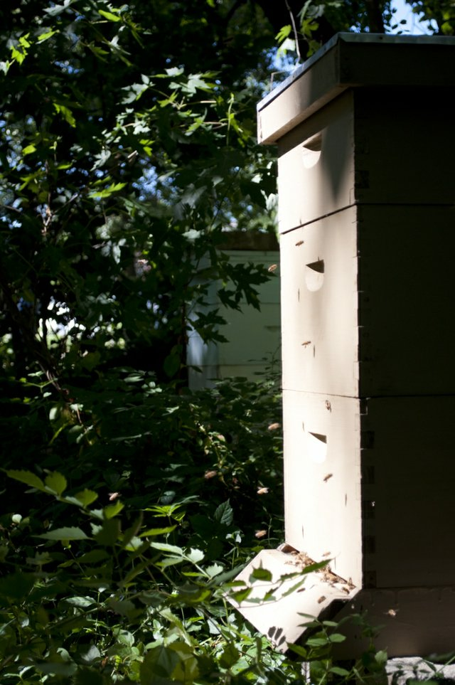 20120622_BackdoorHarvest_311.jpg