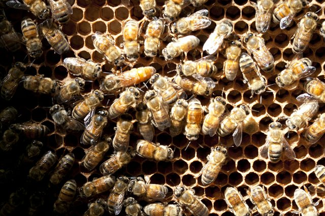 queenbee_BackdoorHarvest_088.jpg
