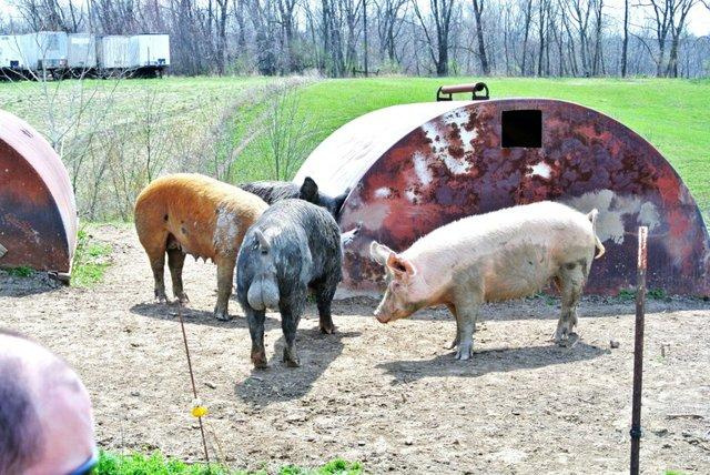 breeders.jpg