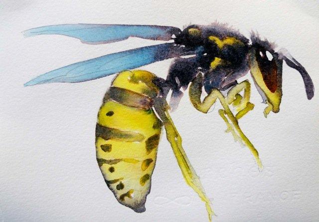 watercolorist carol carter paints from a bug u0026 39 s eye view