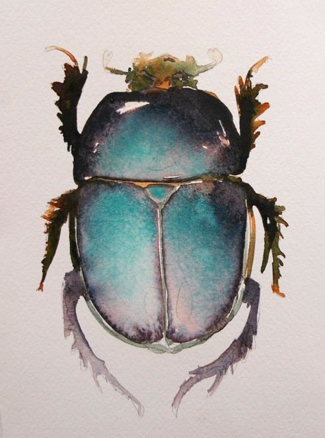 watercolorist carol carter paints from a bugs eye view