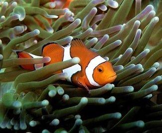 clownfish_anemone.jpg