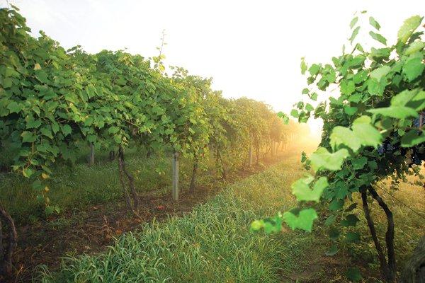 Mount-Pleasant-Winery-11.jpg