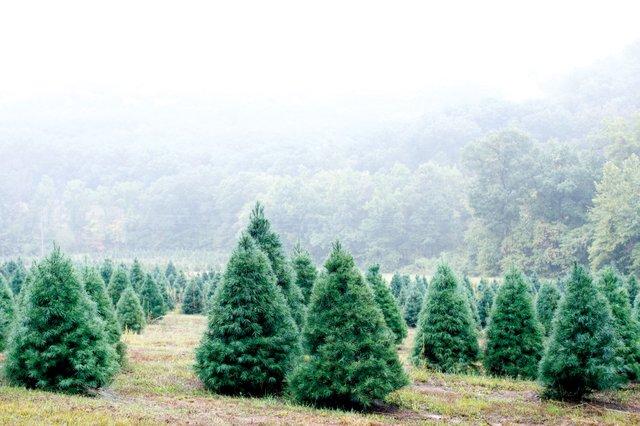 xmas-tree-farm-8.jpg