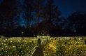 Missouri Botanical Garden's Garden Glow