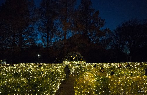 Nine Must See Holiday Light Displays In St Louis St Louis Magazine