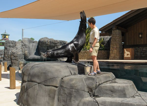 Through March 30: Sea Lion Spring Training