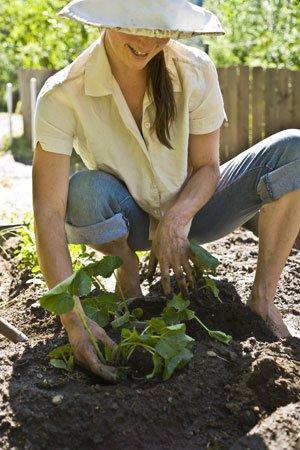 gardeningclasses.jpg