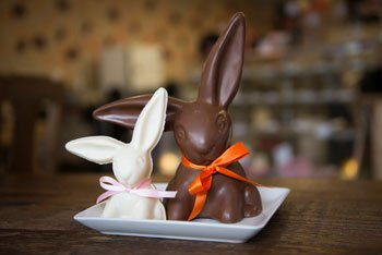 bunnies.jpg