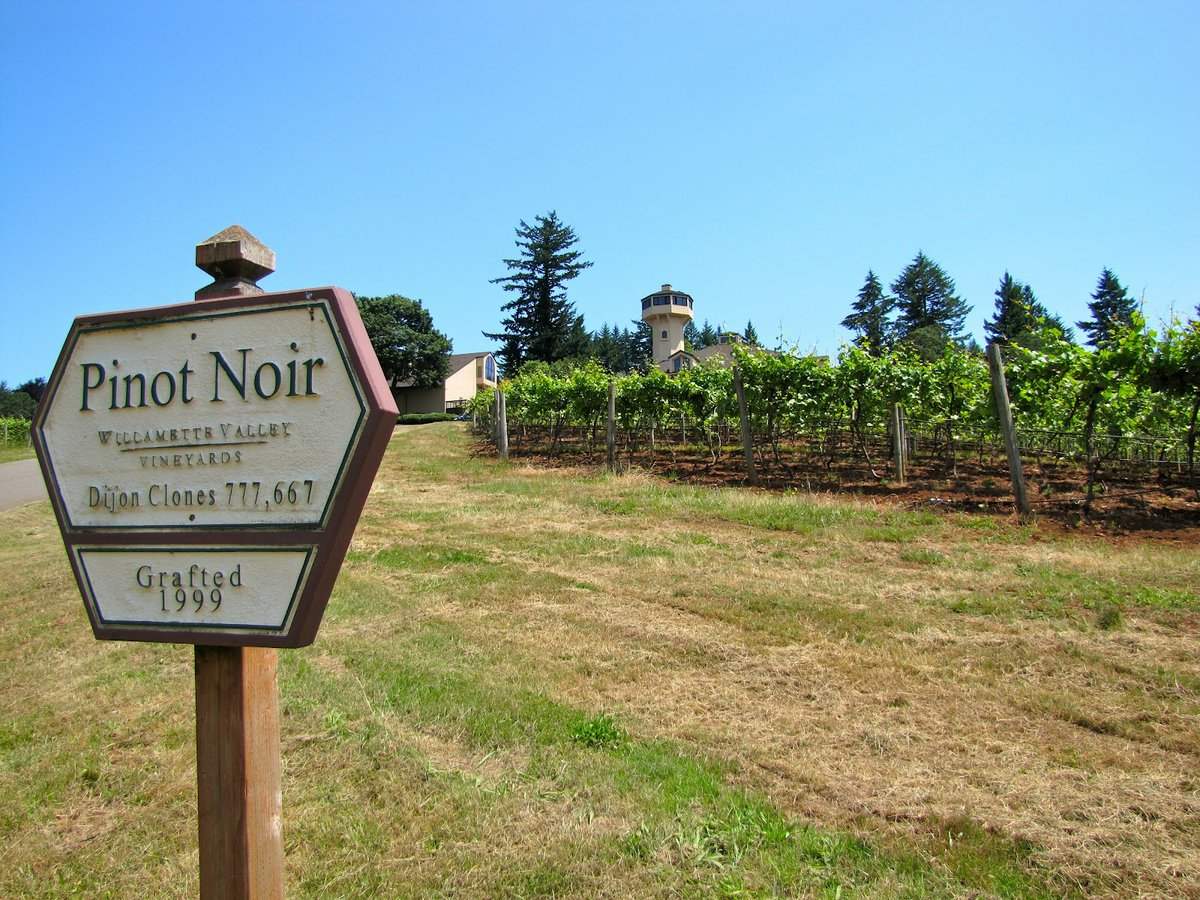The Luxury of Pinot Noir: A Deal with the Devil