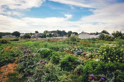 Bakersville Garden Scenic Summer LSS 1456.jpg