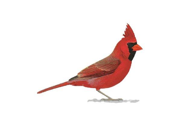 birds7.jpg