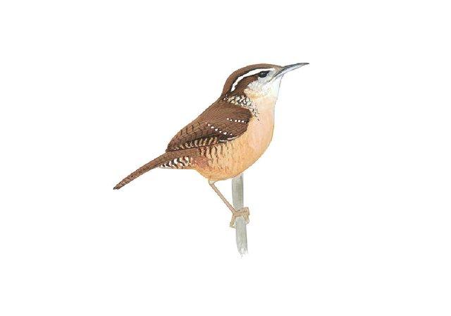birds10.jpg