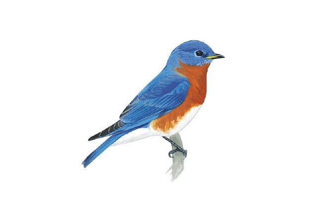 birds13.jpg