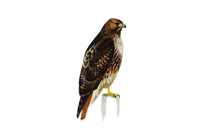 birds14.jpg