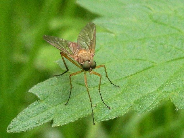 mosquito-54605_640.jpg