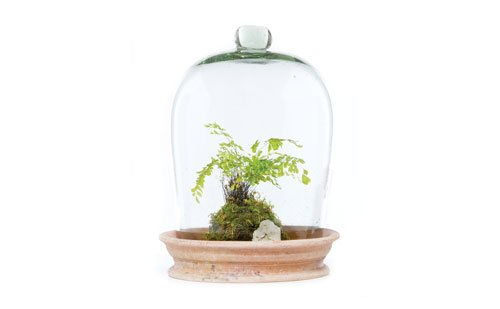 St. Louis Gift Guide Custom terrarium