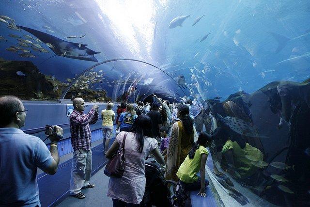aquarium_keithalliso.jpg