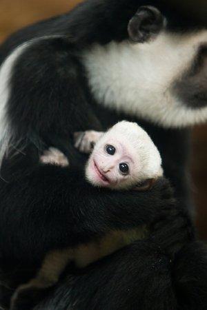 monkey_Primate Keeper Ethan Riepl, Saint Louis Zoo.jpg