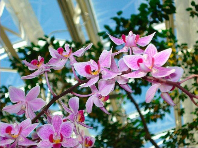 Orchidshow. Photography Courtesy Of Missouri Botanical Garden