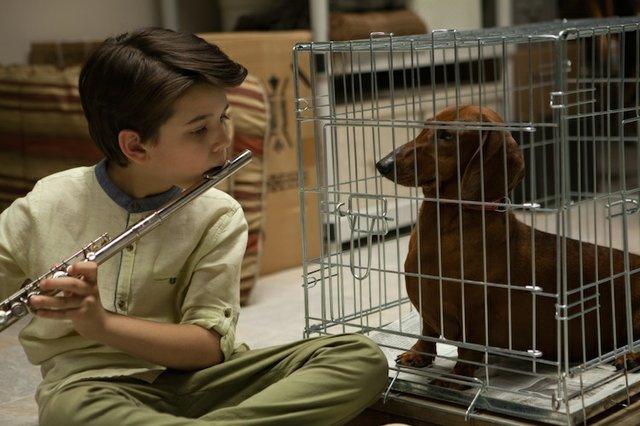 Wiener-Dog.jpg