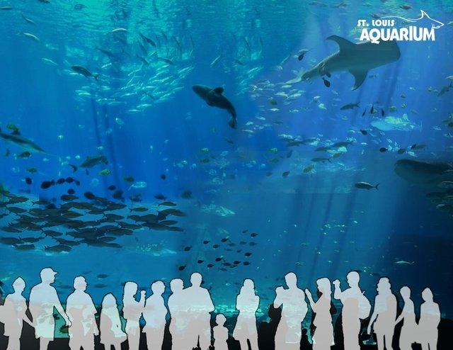 tankaquarium.jpg
