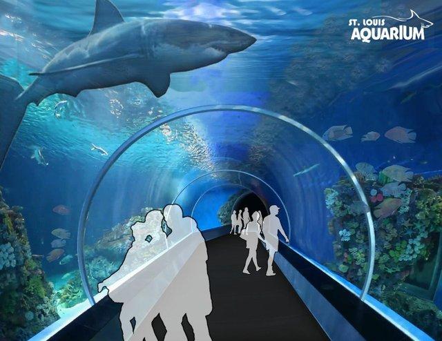 sharktube.jpg