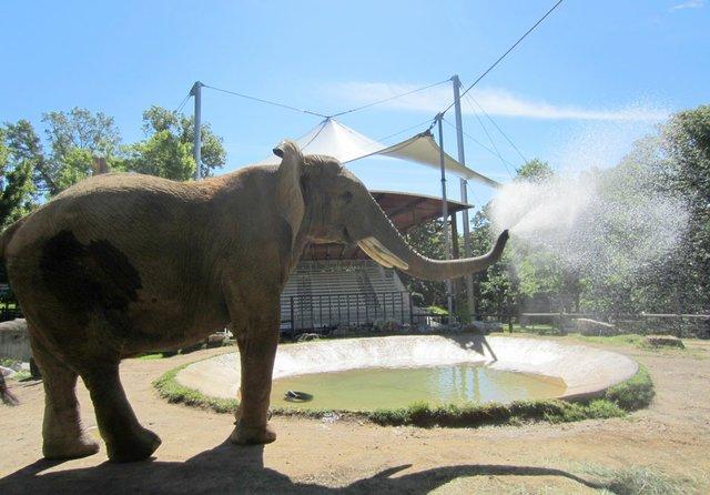 Grants-Farm-Elephants.jpg