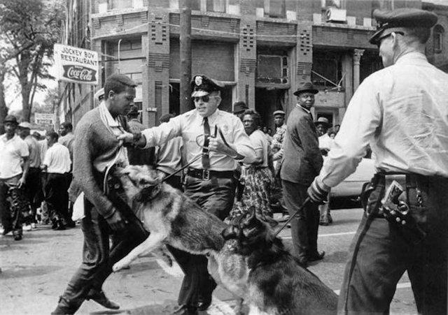 Birmingham_campaign_dogs.jpg