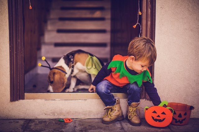 top halloween events for the family st louis magazine. Black Bedroom Furniture Sets. Home Design Ideas