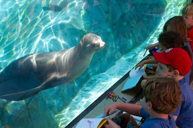 St. Louis Zoo summer camps.jpg