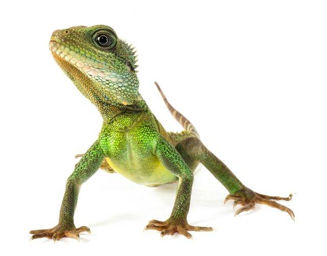 family_lizard.jpg