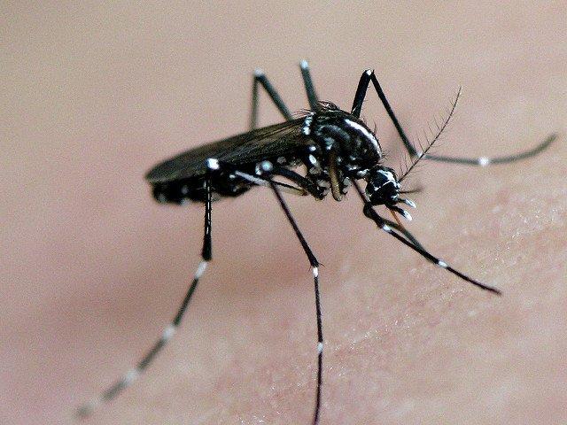 frankieleon zika.jpg
