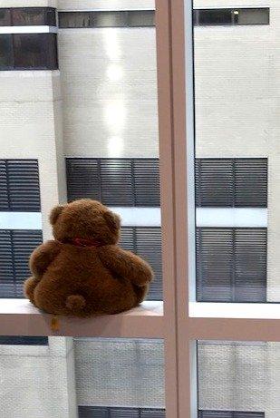 bjc teddy USE.jpg