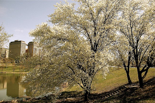 spring stl via Flickr:jaytom86 .jpg