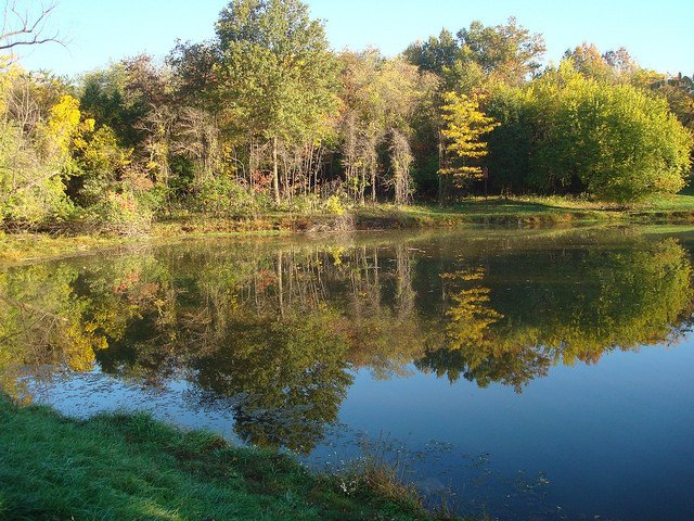 queeny pond fall stl county parks.jpg