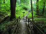 Olin Nature Preserve- Trails (2).JPG