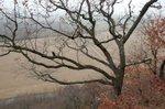 White Rock by Tom Rollins.JPG