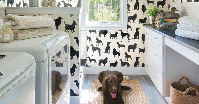 dog_laundry_room.jpg