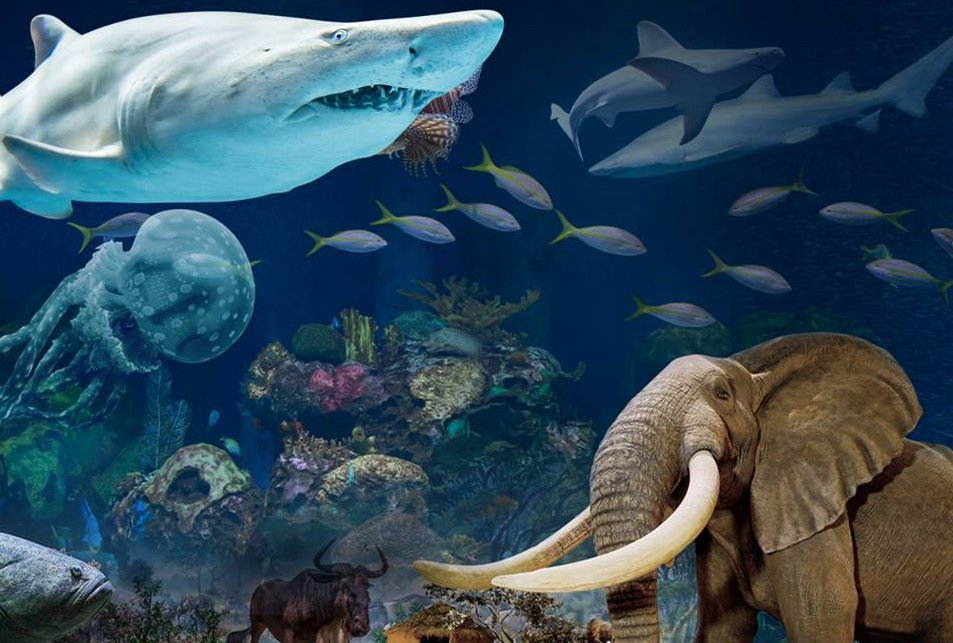 Want to dive with sharks? Head three hours southwest of St. Louis to Wonders of Wildlife in Springfield.