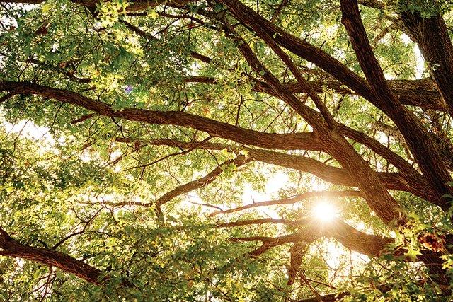 Thomas Schwartztrauber Garden_GRP2242.jpg