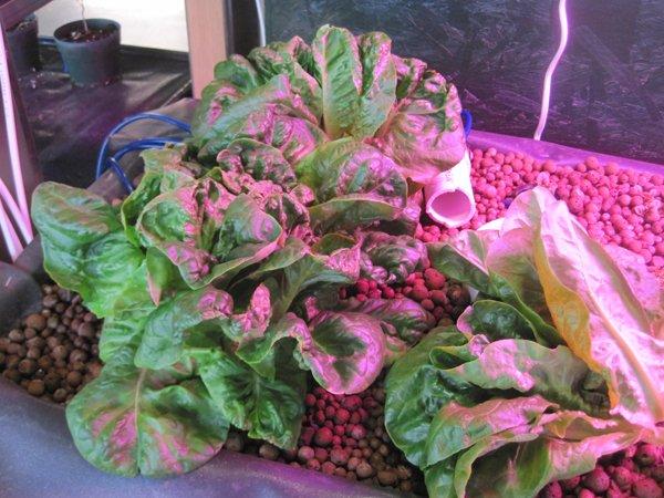 plants food growing in store.jpg