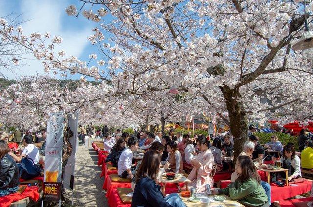 5. Seating Under Cherry Blossoms (1st para).jpg