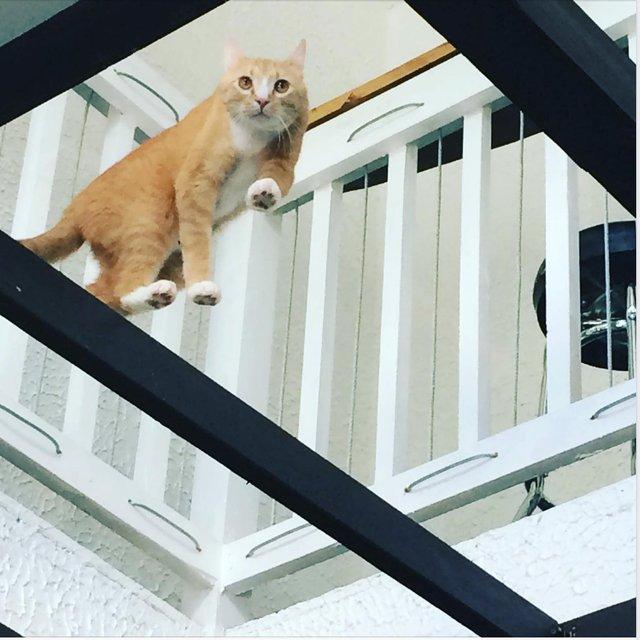 cat -Dash - walking on air .png